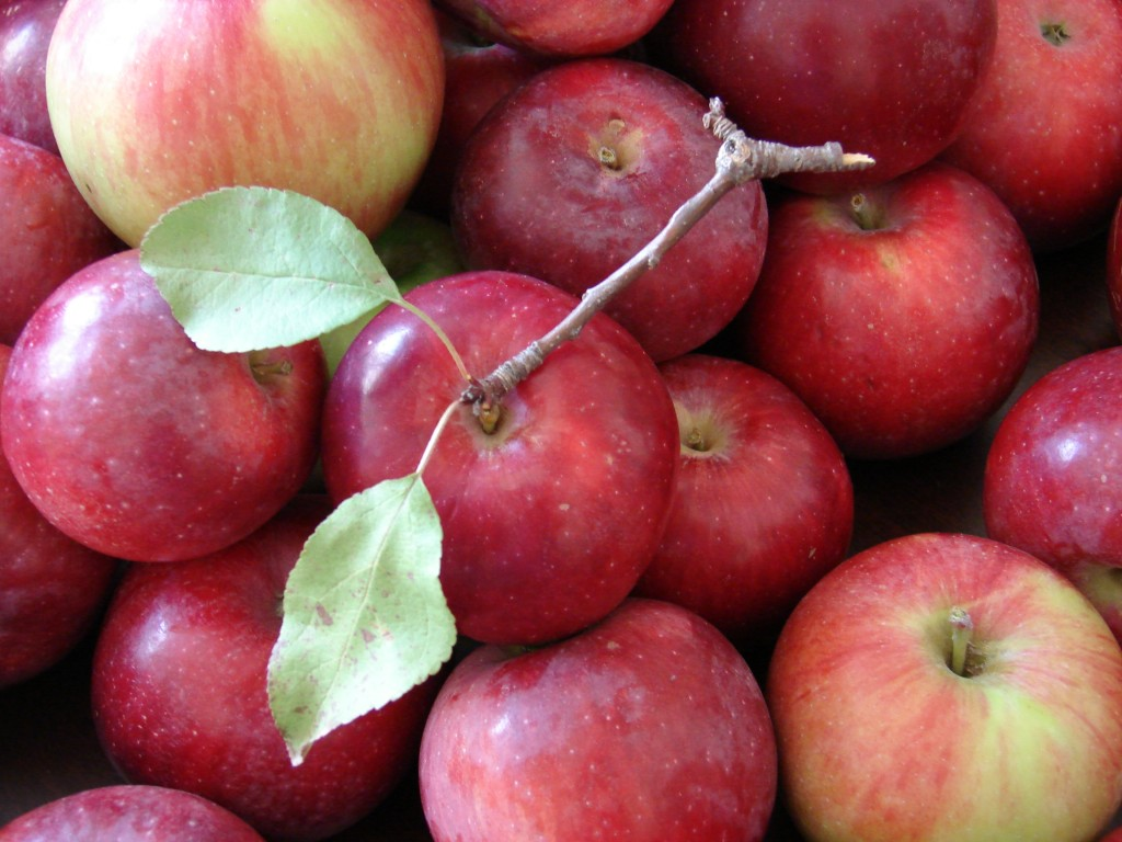 Apples, Photo by Eric Colleary