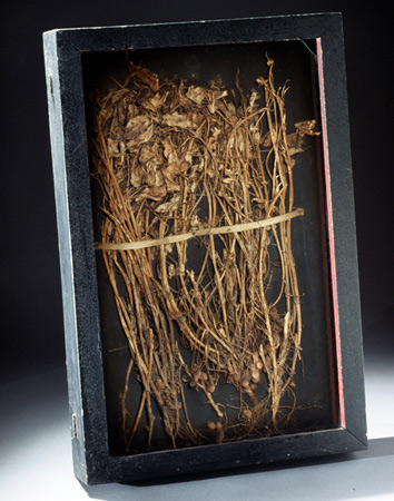 George Washington Carter, Peanut Specimen, Source: National Park Service